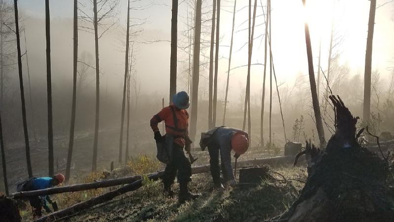 Reforestation in California