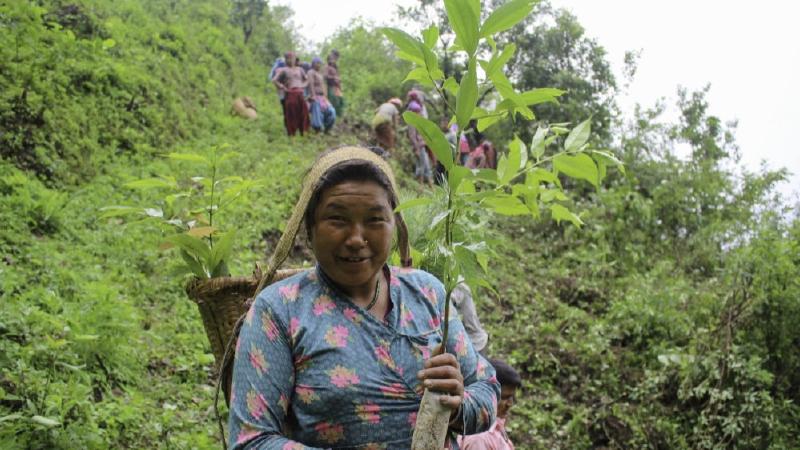 Reforestation in Nepal
